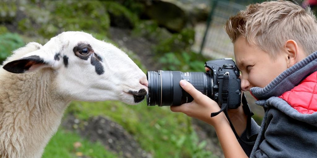 Schaf mit Fotograf