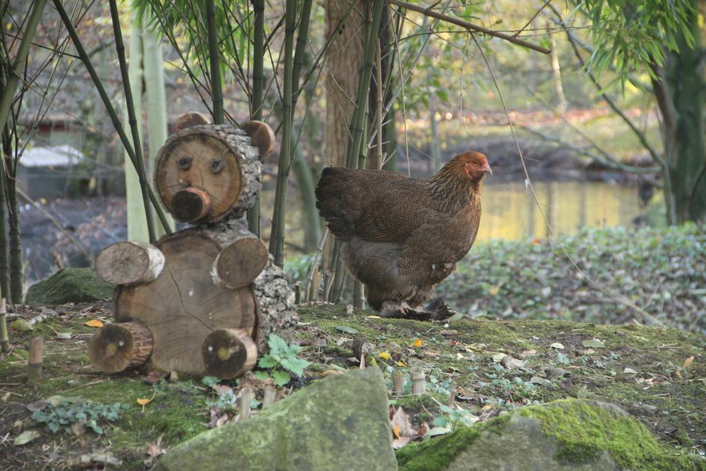 Brahma und Holzbär