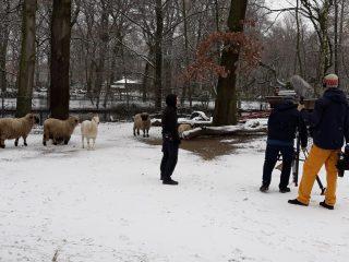 WDR tollstes Tier im Revier