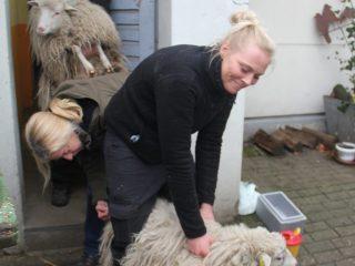 Tierarzt Impfung